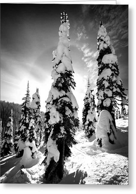 Snow Laden Tree Greeting Card