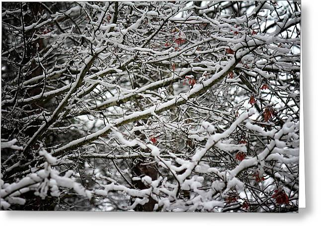 Snow Laden Trees Greeting Card by Greg Simmons