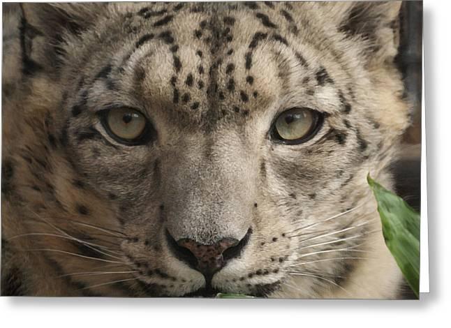 Snow Leopard 13 Greeting Card by Ernie Echols