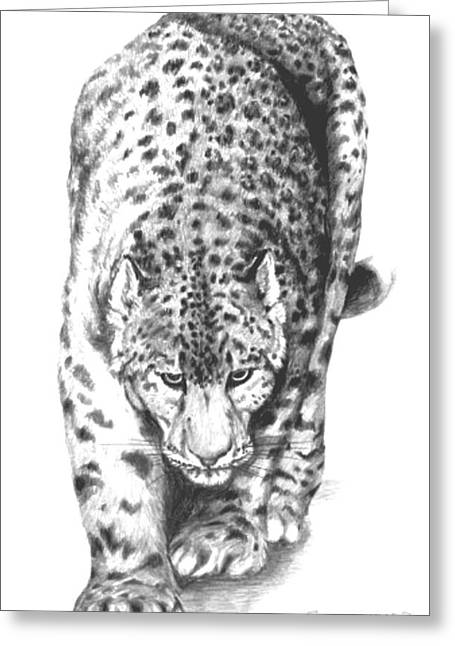 Snow Leopard Greeting Card by Bob Patterson