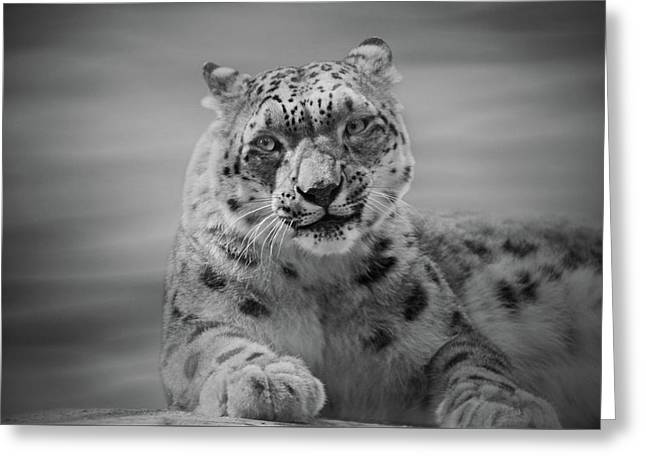 Greeting Card featuring the photograph Snow Leopard  Bw by Sandy Keeton