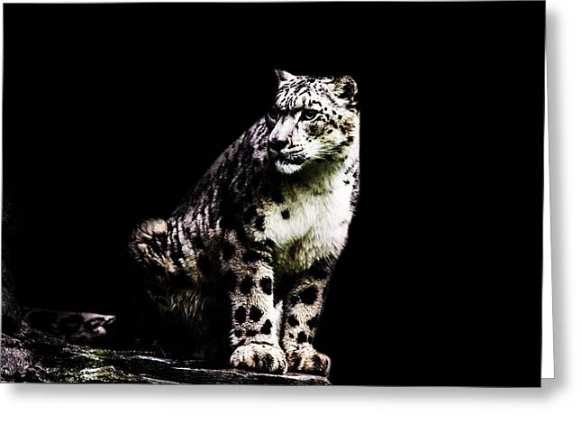 Snow Leopard Greeting Card by Martin Newman