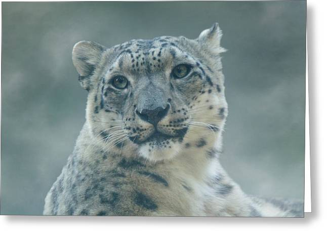 Greeting Card featuring the photograph Snow Leopard Portrait by Sandy Keeton