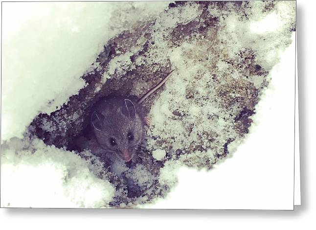 Snow Mouse Greeting Card