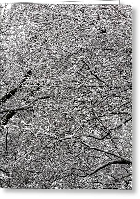 Snow On Branches Greeting Card by Robert Ullmann