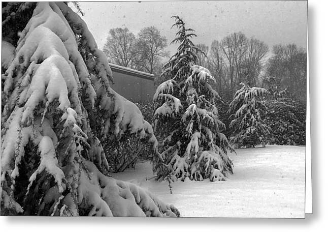 Greeting Card featuring the photograph Snow On Pines by Robert G Kernodle