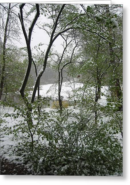 Snow On Spring Buds Greeting Card by Garth Glazier