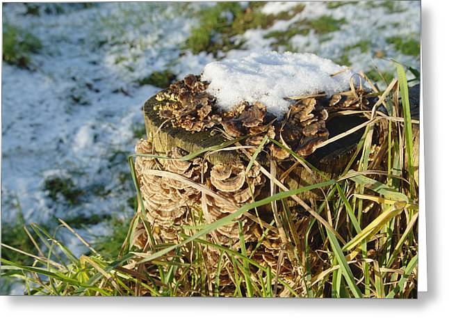 Snow On Stump With Bark Fungus Greeting Card by Adrian Wale