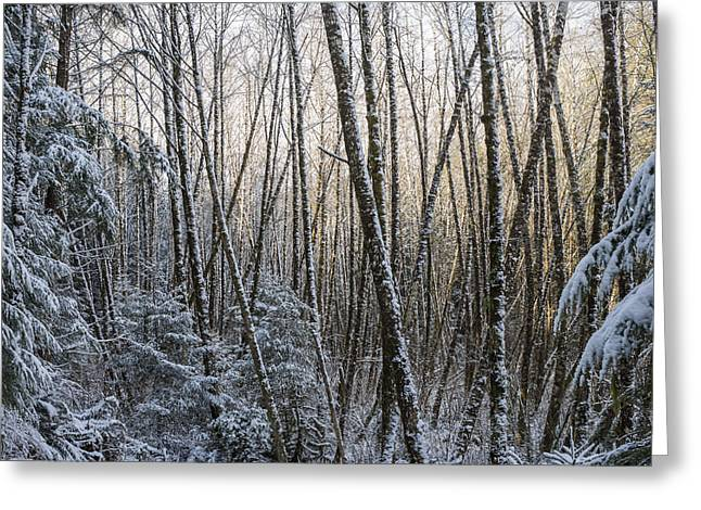 Snow On The Alders Greeting Card