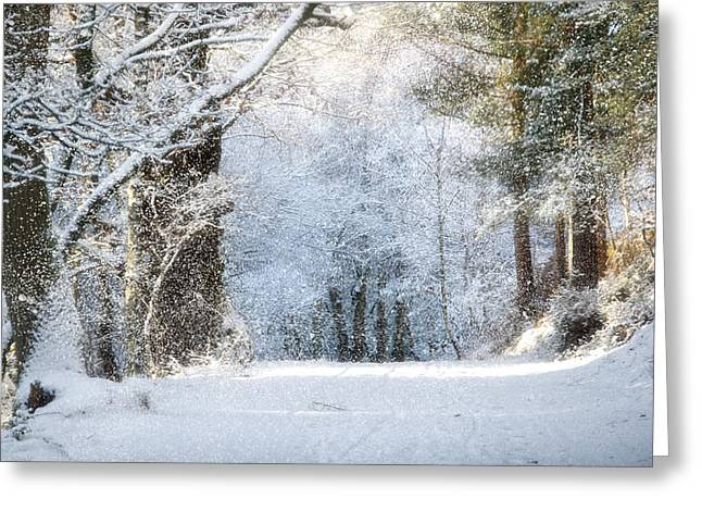 Snow On The Chase Greeting Card by Ann Garrett