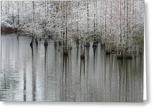 Snow On The Cypresses Greeting Card by Suzanne Gaff