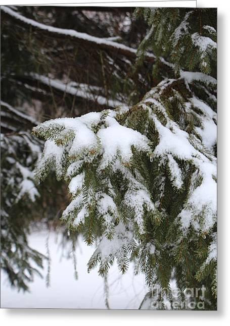 Snow Tree Prints Greeting Cards - Snow on the Evergreen Greeting Card by Jari Hawk