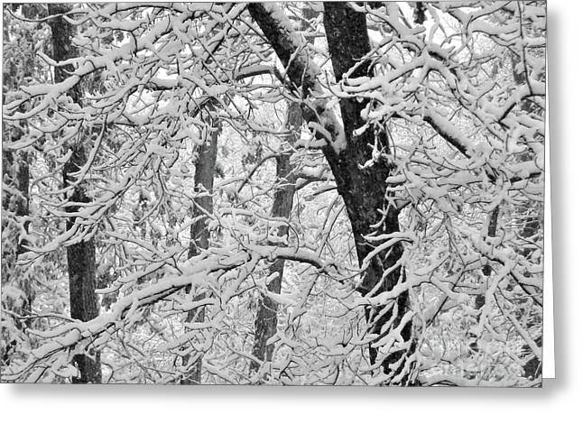 Snow On The Trees In Black And White Greeting Card