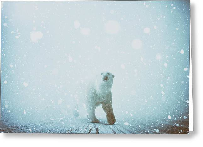 Snow Patrol Greeting Card by Katherine Smit