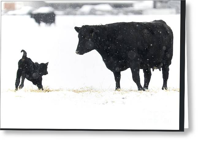 Snow Play Greeting Card