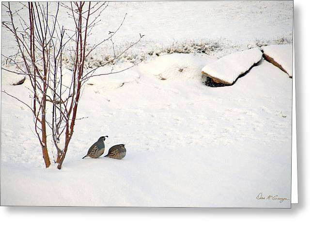Snow Quail Greeting Card