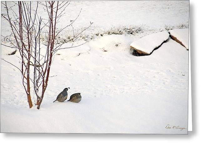 Snow Quail Greeting Card