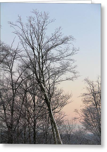 Snow Scene Greeting Card by Carolyn Postelwait