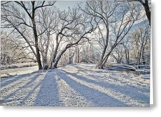 Snow Shadows Greeting Card by James Steele