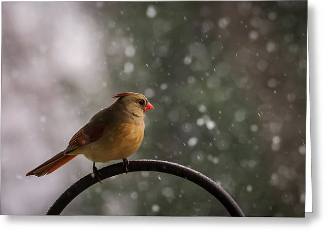 Greeting Card featuring the photograph Snow Showers Female Northern Cardinal by Terry DeLuco