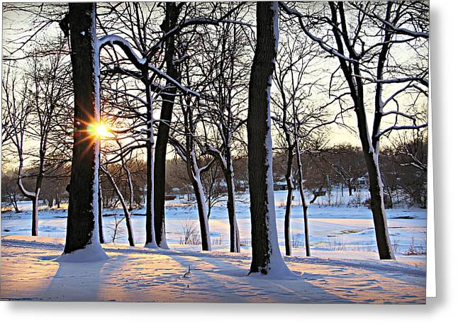 Snow Starred Grove Greeting Card