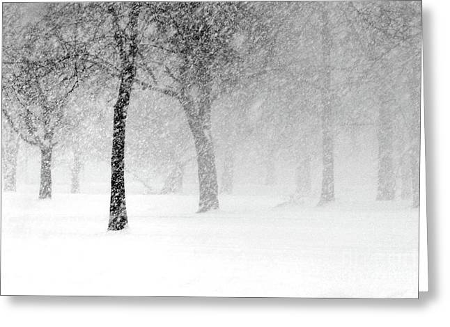 Snow Storm At Starved Rock Greeting Card