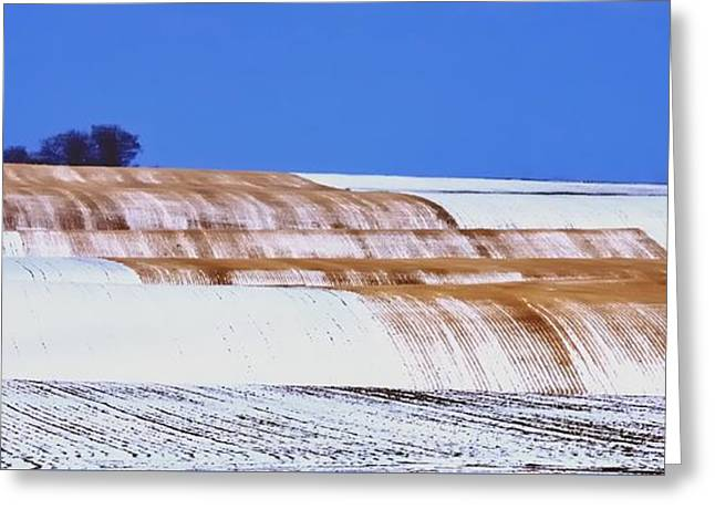 Snow Stubble Tree Line 13955 Greeting Card