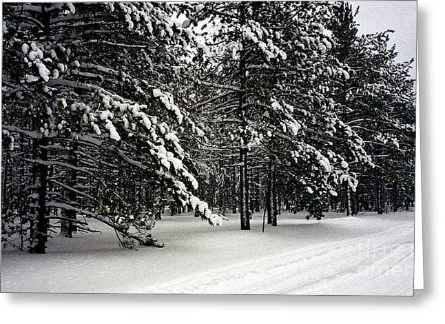 Snow Trail Greeting Card by Cathy Weaver