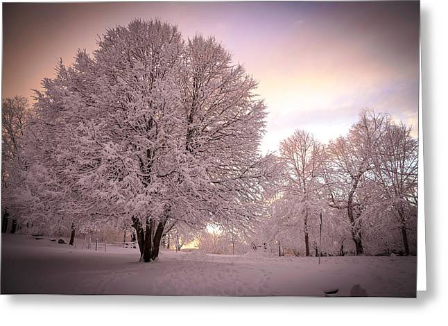 Snow Tree At Dusk Greeting Card
