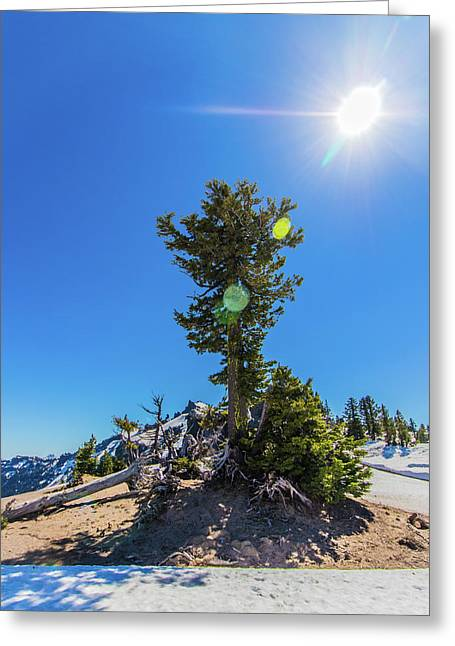 Greeting Card featuring the photograph Snow Tree by Jonny D