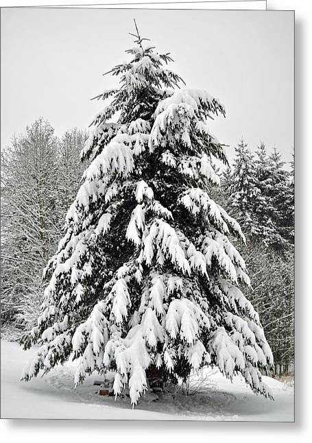 Snow Tree Greeting Card by Matthew Adair