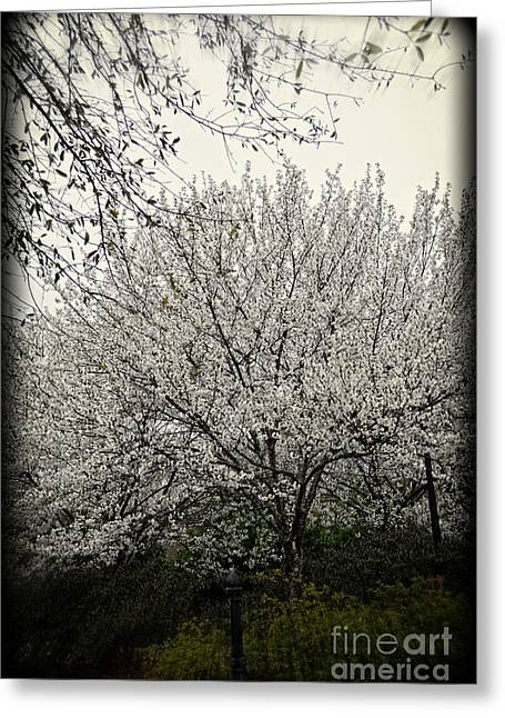 Snow White Flowering Tree Greeting Card