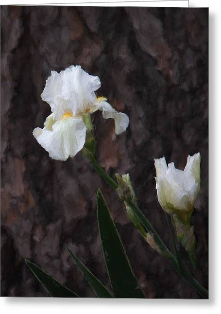 Snow White Iris On Pine Greeting Card