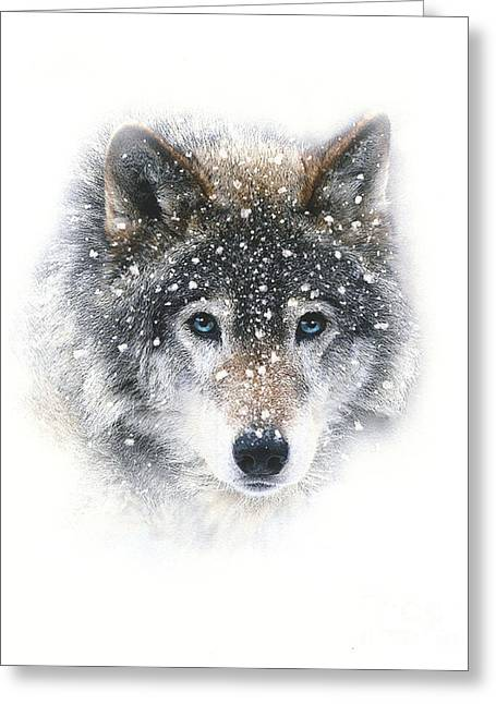 Snow Wolf Greeting Card by Robert Foster
