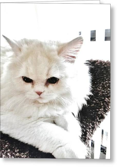 Greeting Card featuring the photograph Snowball Is 92 Year Old Widows Cat by Marsha Heiken