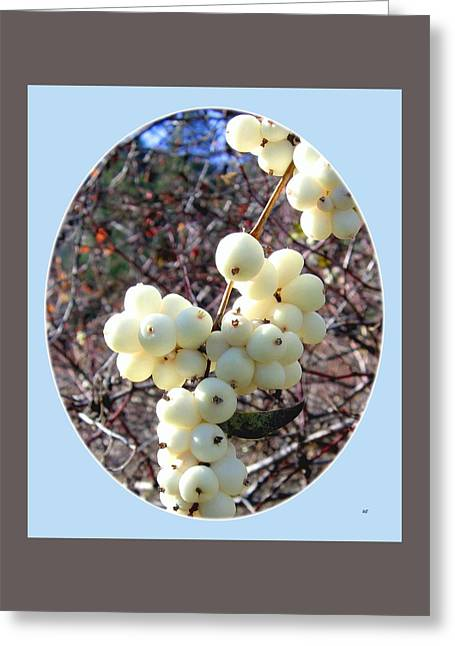 Greeting Card featuring the photograph Snowberry Cluster by Will Borden