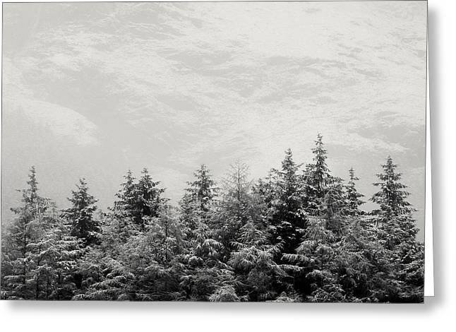 Snowcapped Firs Greeting Card