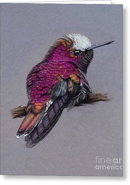 Snowcapped Hummingbird Greeting Card