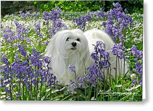 Snowdrop In The Bluebell Woods Greeting Card