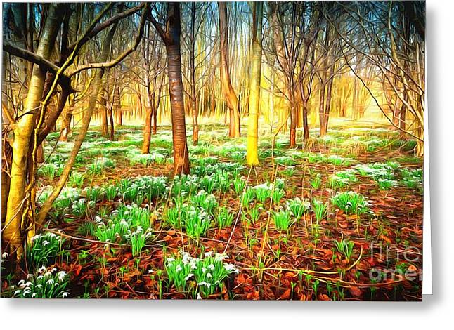 Snowdrops In The Woods Greeting Card by Mick Flynn