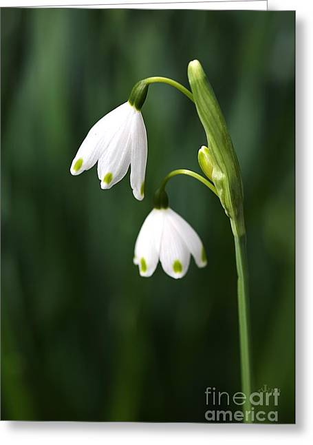 Snowdrops Painted Finger Nails Greeting Card