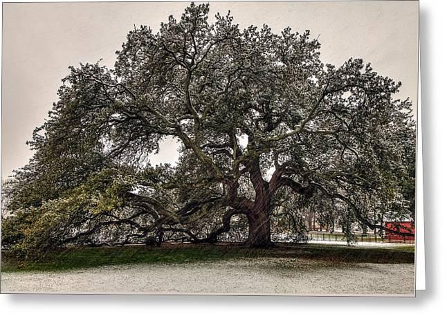 Snowfall On Emancipation Oak Tree Greeting Card