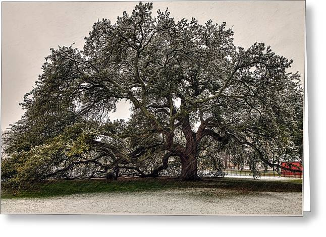 Snowfall On Emancipation Oak Tree Greeting Card by Jerry Gammon