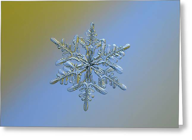 Snowflake Macro Photo - 13 February 2017 - 1 Alt Greeting Card by Alexey Kljatov