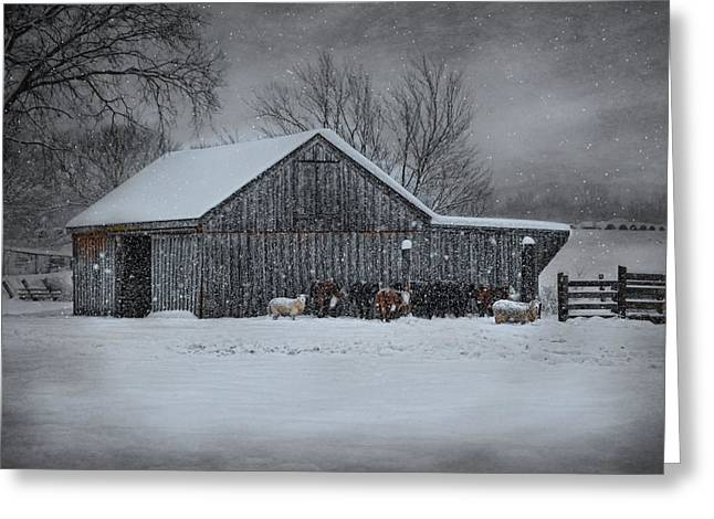 Sheep Photographs Greeting Cards - Snowflakes on the Farm Greeting Card by Robin-lee Vieira