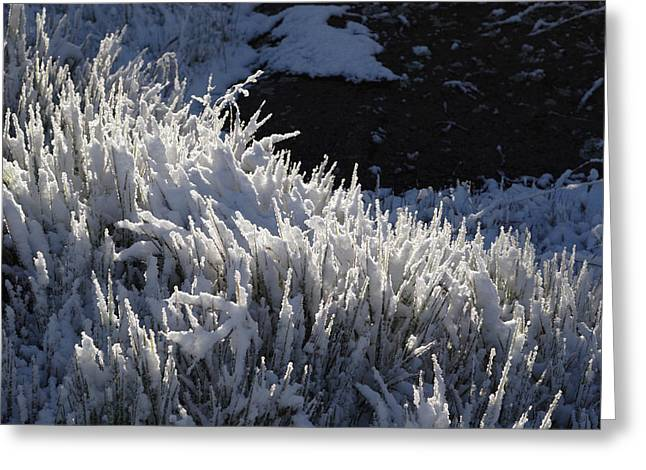 Snowgrass Greeting Card