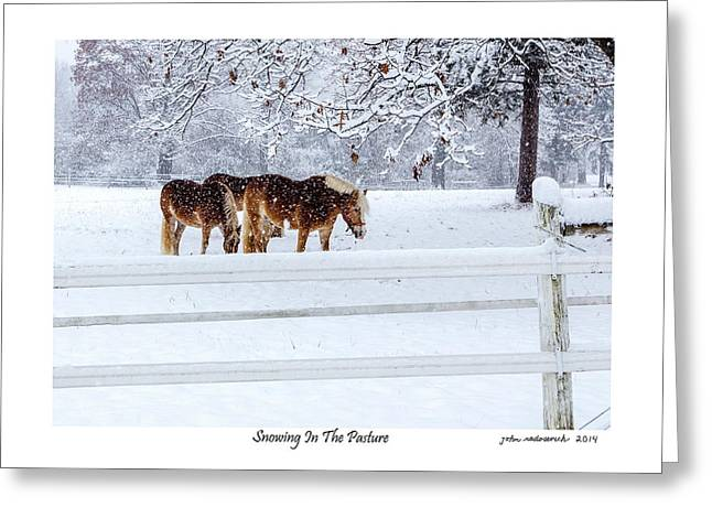 Snowing In The Pasture Greeting Card