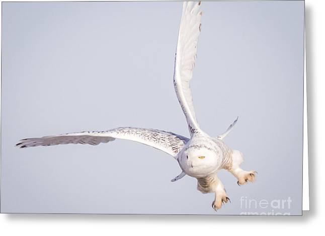 Snowy Owl Flying Dirty Greeting Card