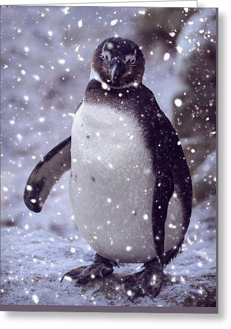 Snowpenguin Greeting Card by Chris Boulton