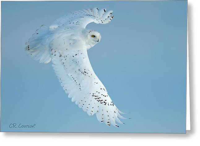 Snowy Against Blue Sky Greeting Card by CR  Courson